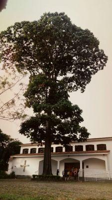 árvore mosteiro